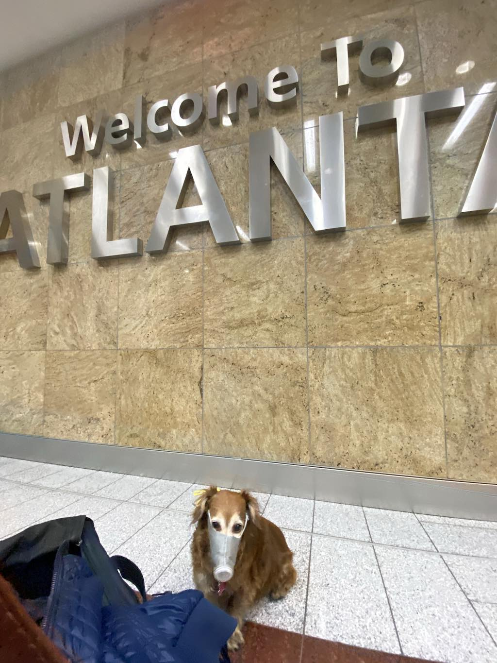 My dog after flying Delta by the welcome to Atlanta sign.